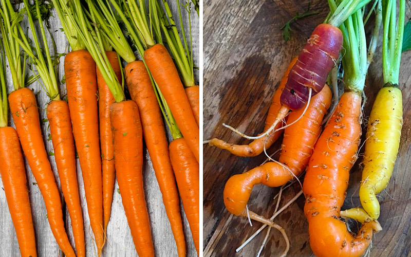 Produce Doesn't Really Look Like That: The Case For Ugly Produce